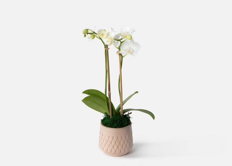 """<p><strong>Urban Stems</strong></p><p>urbanstems.com</p><p><strong>$70.00</strong></p><p><a href=""""https://go.redirectingat.com?id=74968X1596630&url=https%3A%2F%2Furbanstems.com%2Fproducts%2Fplants%2Fthe-elle%2FNF-K-00274.html&sref=https%3A%2F%2Fwww.cosmopolitan.com%2Flifestyle%2Fg36877244%2Fbest-plants-for-kitchen%2F"""" rel=""""nofollow noopener"""" target=""""_blank"""" data-ylk=""""slk:Shop Now"""" class=""""link rapid-noclick-resp"""">Shop Now</a></p><p>I mean, if there was a *perfect* flower to exist that you can trust to NOT die after you've forgotten about it for a couple of days, it's an orchid. It's pet-friendly, doesn't beg for attention, and will do just fine without a lot of light. We love a chill queen!</p>"""