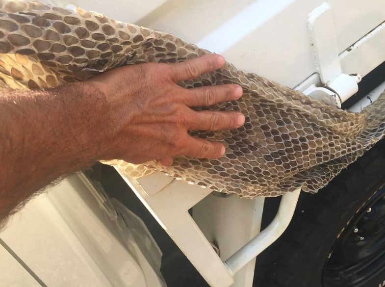 Innisfail pest controller finds giant snake skin in roof