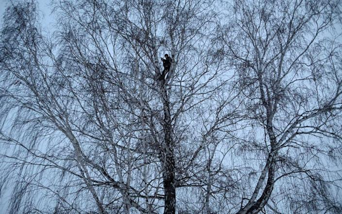 Russian student and blogger climbs a tree for better celular internet connection in his remote Siberian village - Reuters