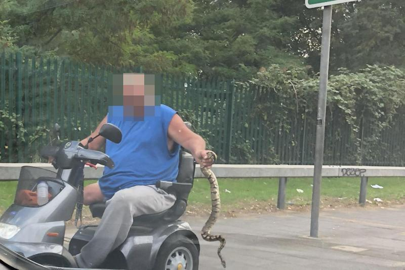 A man rides on a mobility scooter while carrying a snake at arm's length in south London: David Videcette