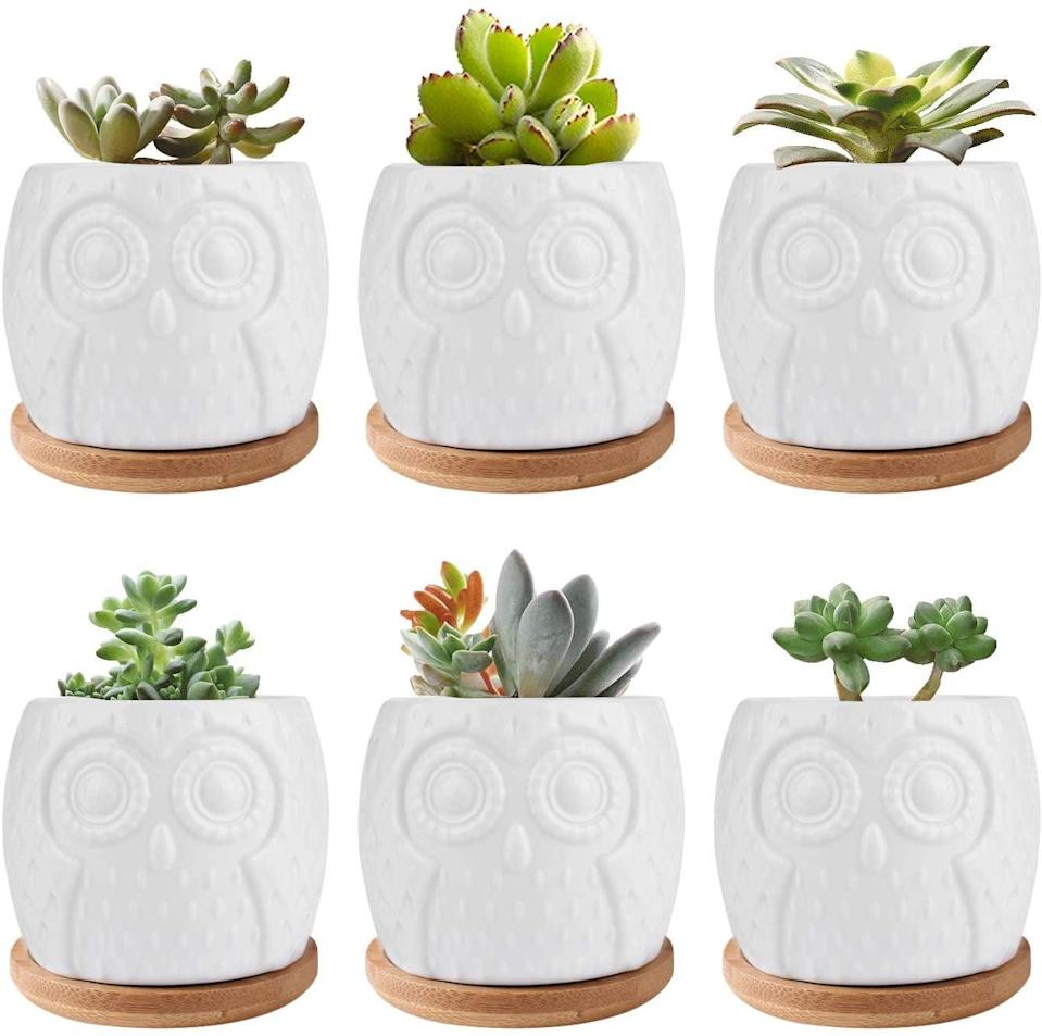 <p>How cute are these <span>Brajttt 6 Pcs Owl Succulent Planters w/ Bamboo Saucers and Drainage</span> ($13)?! Decorate your room, desk, and any other place that needs a little green with these fun planters.</p>