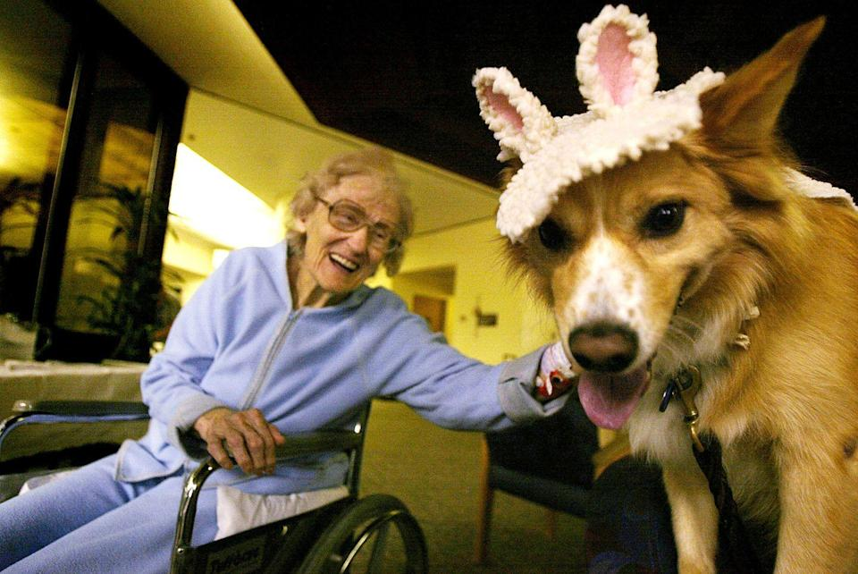 <p>Therapy dog programs become widespread in hospitals such as the Torrance Memorial Medical Center, which launched their Pet Assisted Therapy program this year. While specially trained dogs visit patients each year, Halloween is extra-special, because the pups dress in costume. </p>
