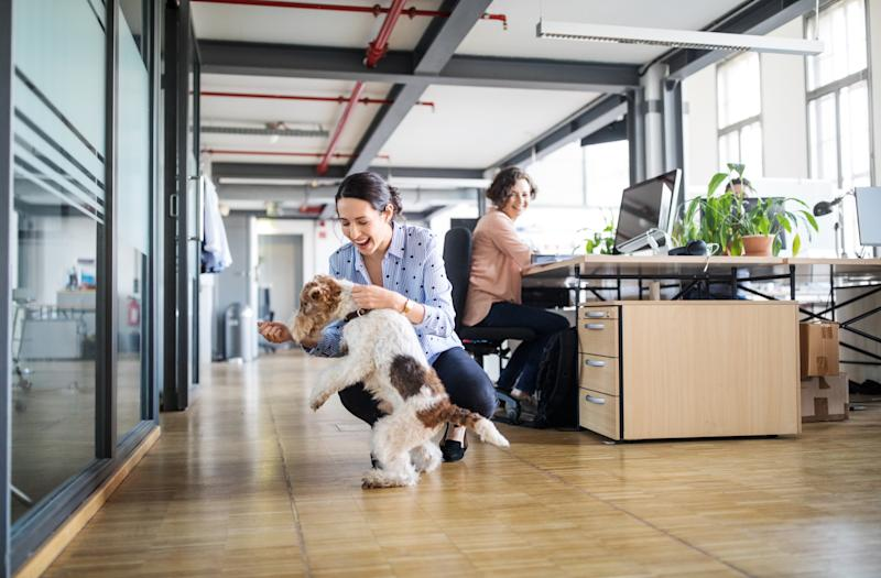 Businesswoman looking at female colleague playing with dog on tiled floor in creative office