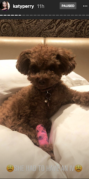 The 'Roar' singer took to Instagram Stories to share how her dog had a scary accident but is now doing fine thanks to her friend.