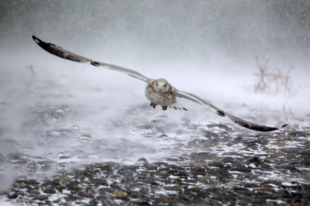 <p>A seagull takes flight in high winds and blowing snow as a massive winter storm begins to bear down on the region on Jan. 4, 2018 in Hull, Mass. (Photo: Scott Eisen/Getty Images) </p>