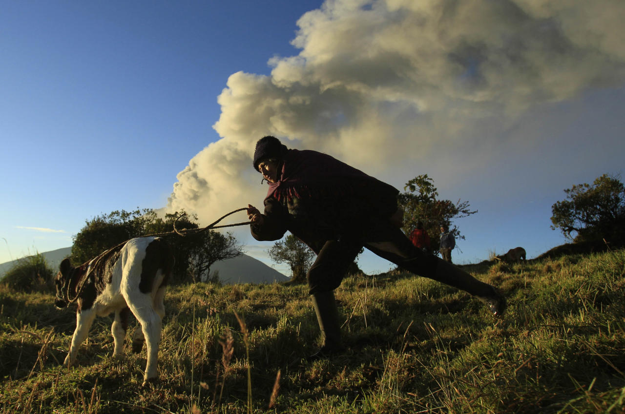Maria Estela works with her livestock in a field near the Tungurahua volcano, which is erupting ash and steam, as seen from Huambalo, Ecuador, Tuesday, Aug. 21, 2012. (AP Photo/Dolores Ochoa)
