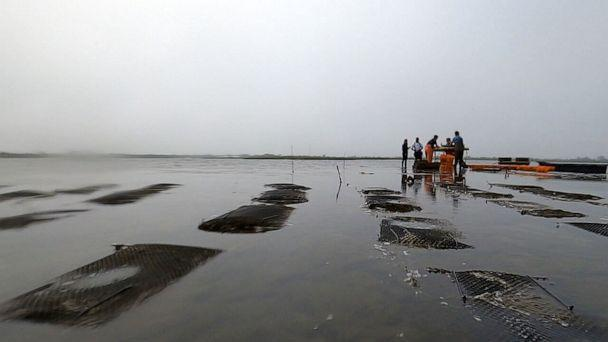 PHOTO: Thatch Island Oyster Farm in Long Island, New York on May 26, 2021. (ABC News)