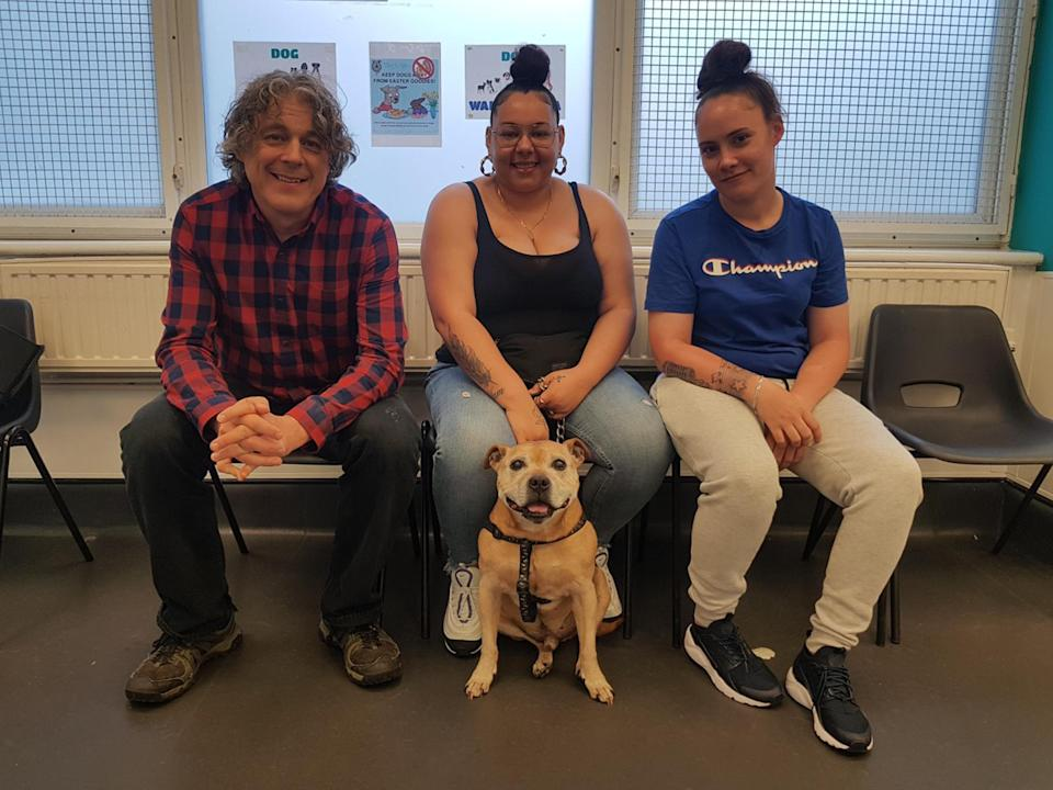 A generic images from The Dog Rescuers With Alan Davies (Channel 5)