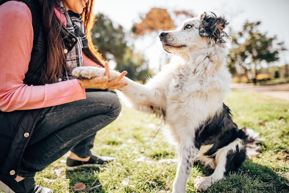 A dog trainer can help you assess how to make the transition back to the office as easy as possible on your pet. (Photo: franckreporter via Getty Images)
