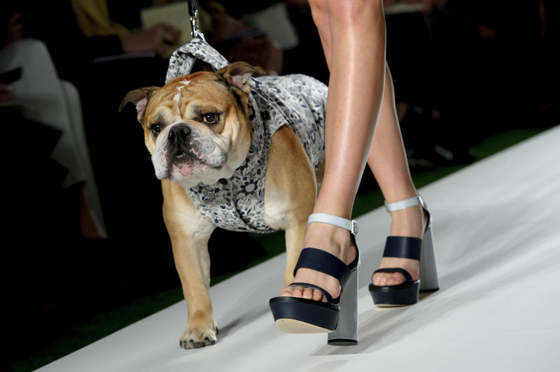 A model and bulldog wear a design created by Mulberry during London Fashion Week Spring/Summer 2014, at Claridges Hotel in central London, Sunday, Sept. 15, 2013. (Photo by Jonathan Short/Invision/AP)