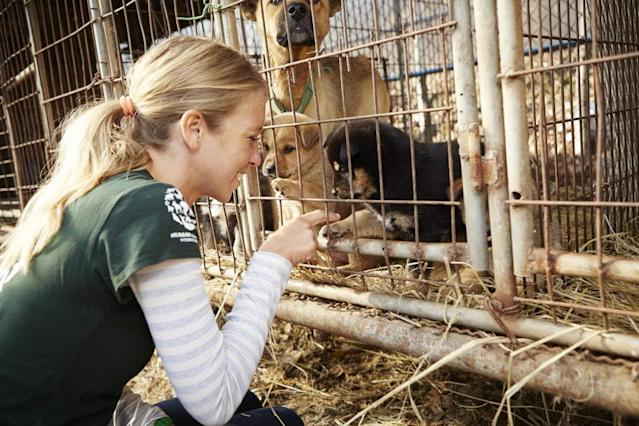 <p>In this image released on Tuesday, Jan. 6, 2015, in December 2014, Humane Society International visited a farm in Ilsan, South Korea, where dogs were being raised for the dog meat trade. HSI worked with the farmer and secured an agreement with him to stop raising dogs for food and move permanently to growing crops as a more humane way to make a living. HSI, the international affiliate of The Humane Society of the United States, is working to reduce the dog meat trade in Asia, including South Korea, where dogs are farmed for the industry. HSI plans to work with more South Korean dog meat farmers to help them transition out of this cruel business. In this image, HSI consultant Lola Webber plays with puppies at the farm. The dogs on South Korean farms live their entire lives in cages with little attention from the farmers, even for food and water. Additionally, animal protection laws there are routinely ignored in the trade such as killing dogs in front of other dogs. Their suffering is endless. (Manchul Kim/AP Images for Humane Society International) </p>