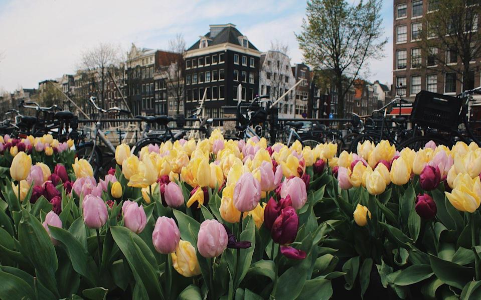 <p>Take in the pretty tulips on a stroll in the city</p>