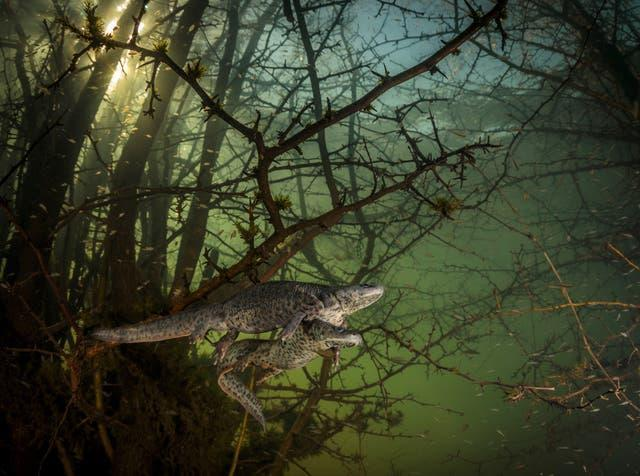 Image entered into the Wildlife Photographer of the Year contest