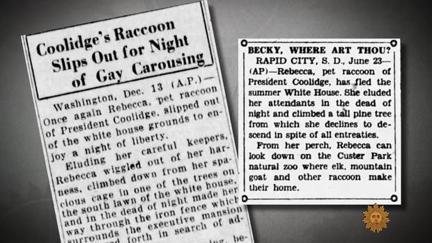 The tabloids go after Rebecca the Raccoon. / Credit: CBS News