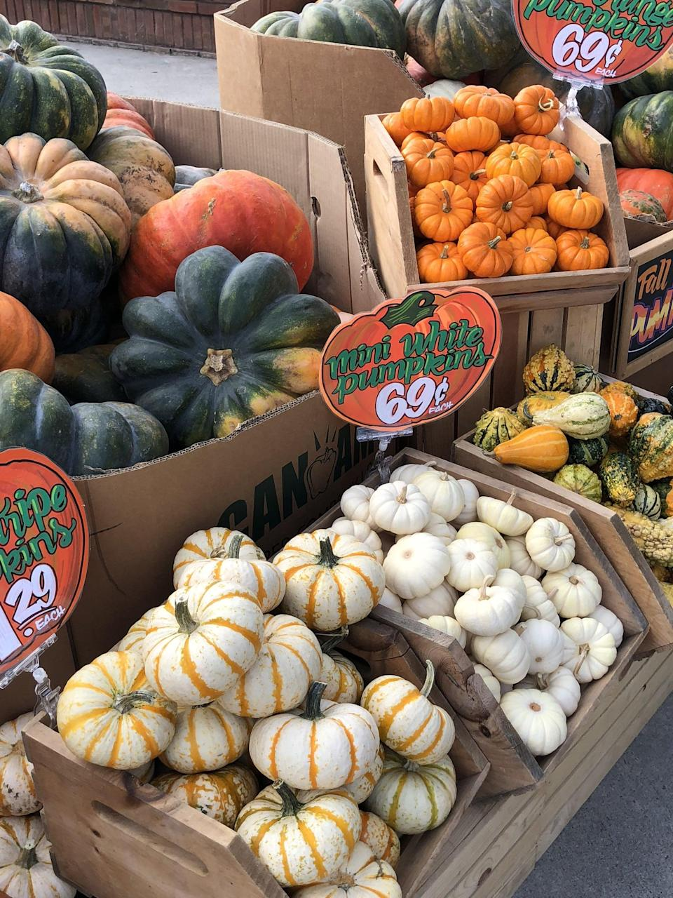 <p>Aside from pumpkin, you'll find tons of in season squashes like acorn, delicate (my fave!), butternut, and spaghetti. They also have adorable mini pumpkins and gourds to add a little seasonal joy to your home.</p>
