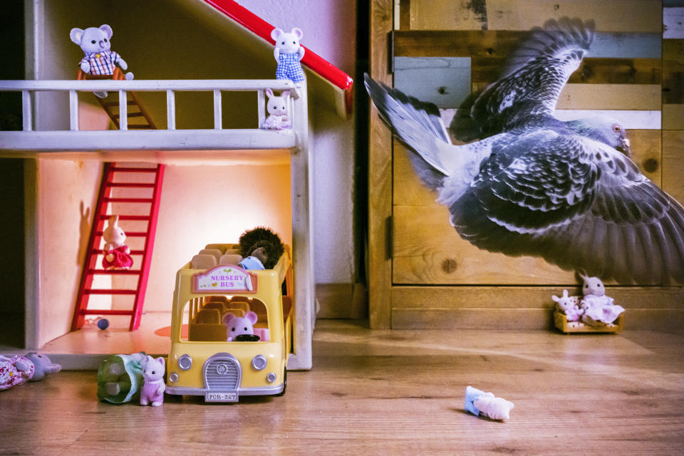 In this image released by World Press Photo, Thursday April 15, 2021, by Jasper Doest, part of a series titled Pandemic Pigeons—A Love Story, which won first prize in the Nature Stories category, shows Ollie flies through the living room, after knocking over toys, in Vlaardingen, the Netherlands, on 30 April 2020. (Jasper Doest, World Press Photo via AP)