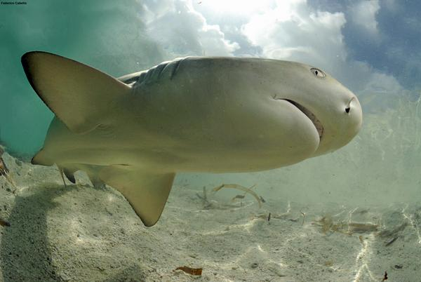 Venezuela Bans Shark Finning, Establishes Shark Sanctuary