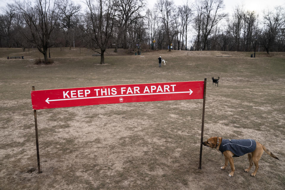 Harvest, a long-time reveler to Prospect Park's Long Meadow, sniffs a social distancing sign as he plays off-leash during designated free-roaming hours, Sunday, Jan. 31, 2021, in the Brooklyn borough of New York. Go to any dog park right now and you'll probably find lively pandemic puppies, along with new owners learning the ins and outs of off-leash play. One of the silver linings of the pandemic is that many people are discovering the joys of dog ownership. (AP Photo/John Minchillo)