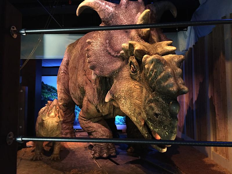"""This Wednesday, Nov. 23, 2016 photo, shows a pair of pachyrhinosaurus that move around as part of the """"Jurassic World"""" exhibit opening Friday, Nov. 25, at the Franklin Institute in Philadelphia. (AP Photo/Josh Cornfield)"""