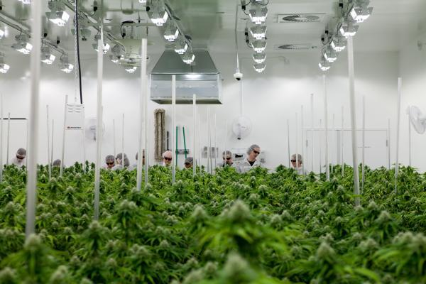 Aurora Cannabis Inc. (ACB) Fell By -4.6%, But Why?