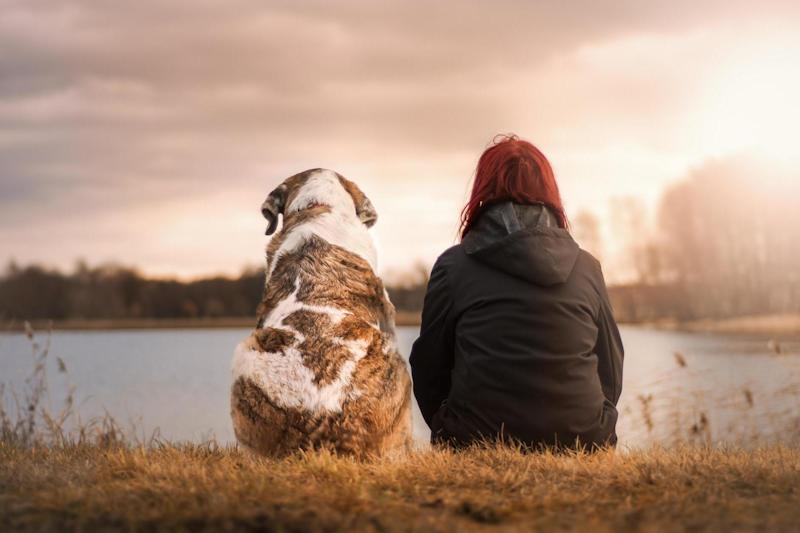 Dog owners are 24 per cent less likely to die over the next decade than non-dog owners, according to the study: Pixabay