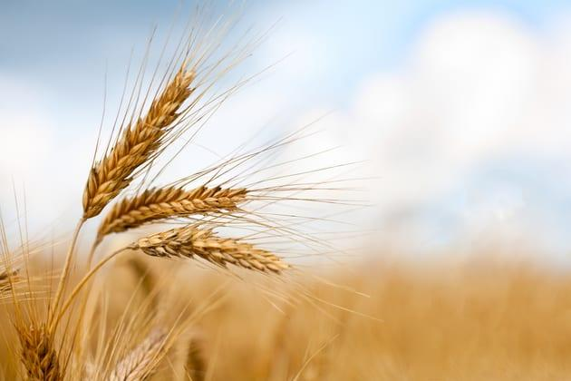 Pro Farmer Crop Tour Lower Expected Acre Yields, Grains Mixed