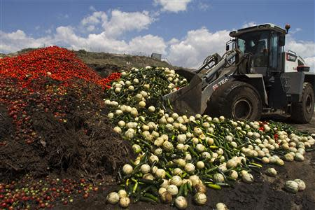 A digger unloads discarded vegetables into a pile of vegetable residue at the Albahida vegetable recycling plant in Nijar, in the southern Spanish region of Almeria