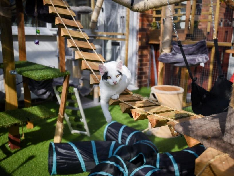 The couple built the enormous playground to prevent their cats from being run over. (SWNS)