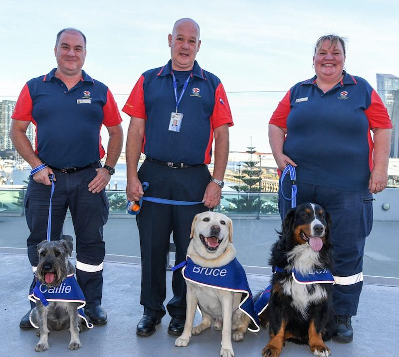Peer support dog Callie with handler Rob Simons, Bruce with Ken Whittle and Lexie with Jo Algie. — Pic courtesy of Health Victoria