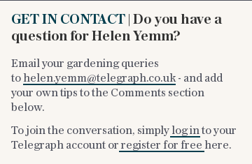 GET IN CONTACT | Do you have a question for Helen Yemm?