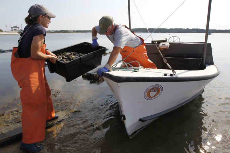Tisbury, Mass., Shellfish Constable Danielle Ewart, left, and Deputy Constable Fred Benson, lift a crate of adult scallops into their boat while preparing to release the shellfish back into the wild, in Vineyard Haven, Mass., on the island of Martha's Vineyard, Friday, Aug. 26, 2011. The scallops were removed from cages, where they were placed to spawn, to be released in advance of Hurricane Irene.  The scallops could be killed if left in the containers during a violent storm. (AP Photo/Steven Senne)