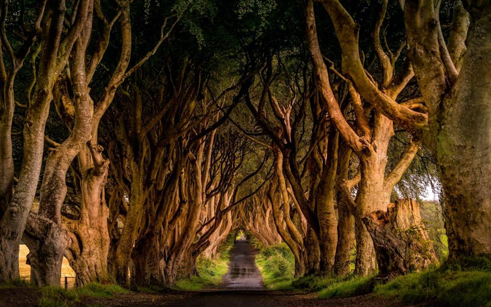 The Dark Hedges - Getty