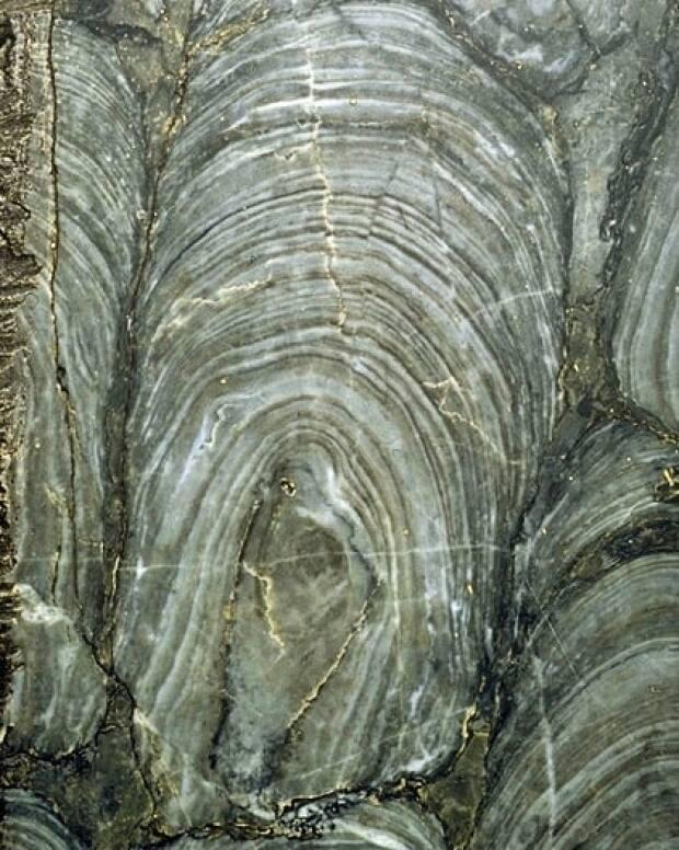 Billion-year-old stromatolite fossils are found in the marble that formed in South America and can be seen in Dominion Park, said Russell-Dolan.