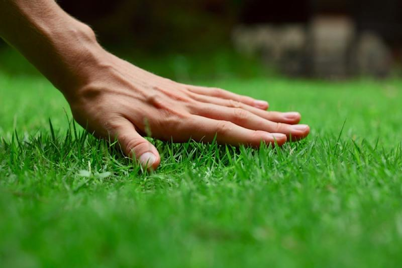 The Single Best Tip for a Perfect Lawn, According to a Professional