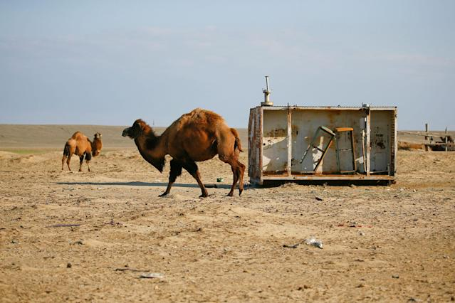 """<p>Camels graze next to an abandoned fuel station in the village of Zhalanash, near the Aral Sea, south-western Kazakhstan, April 16, 2017. Zhalanash, where some 700 people live, is close to what used to be a cove (small bay) housing many fishing vessels and later became a tourist attraction known as """"the ship graveyard"""". (Shamil Zhumatov/Reuters) </p>"""