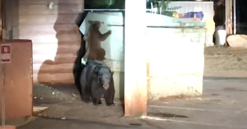 California Sheriff's Office Helps Bear Family Rescue Cub Trapped in Dumpster