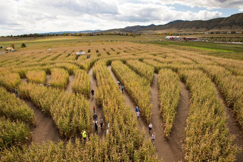 chatfield farms corn maze with several people in it