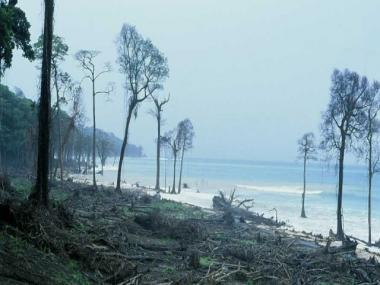 The Zai Whitaker column | Tragedy on Great Nicobar; a story of the 2004 tsunami in two parts