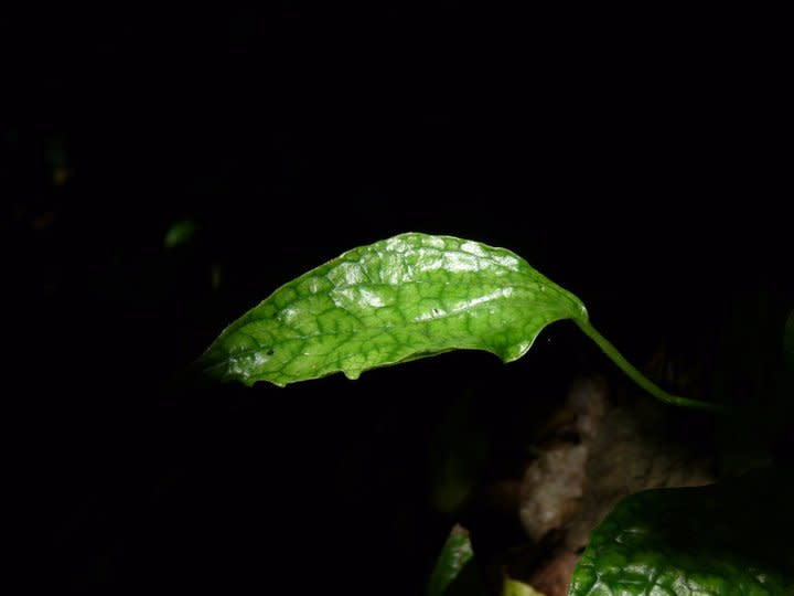 A few stray shafts of sunlight do reach the forest floor, and nourish new growth