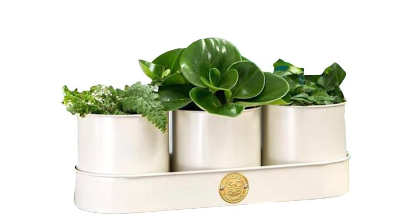 Burgon & Balll Set Of Three Herb Planters In A Tray