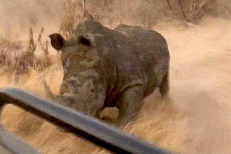 White Rhino Charges at Tourists for More Than a Minute in Terrifying Escape Video