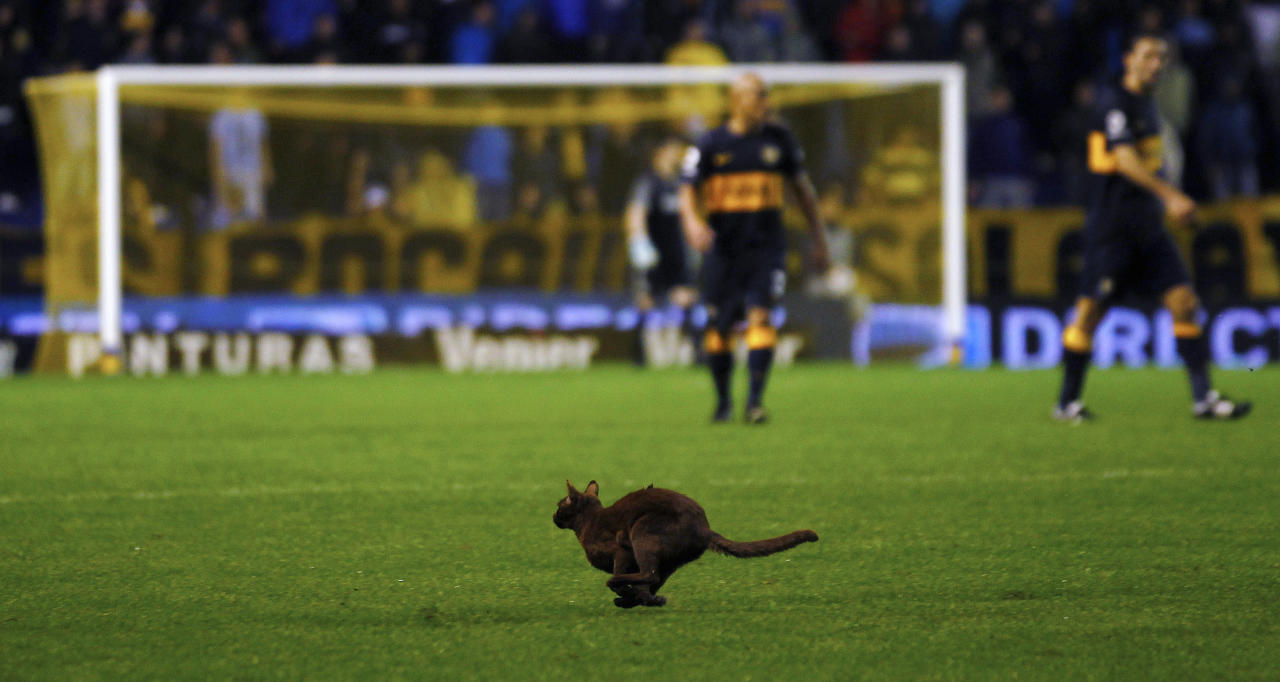 A cat runs on the field during the Argentine First Division soccer match between Boca Juniors and Estudiantes de La Plata in Buenos Aires, October 21, 2012. REUTERS/Marcos Brindicci (ARGENTINA - Tags: SPORT SOCCER ANIMALS)
