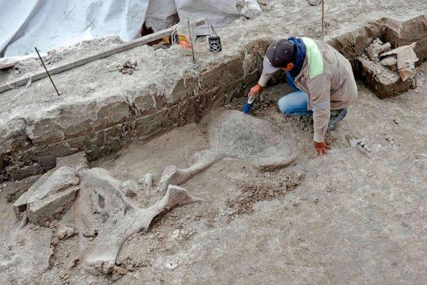 PHOTO: An expert works on mammoth bones found in what is believed to be the first mammoth trap set by humans, in Tultepec, Mexico, in a photo released by Mexico's National Institute of Anthropology (INAH). (INAH via AFP/Getty Images)