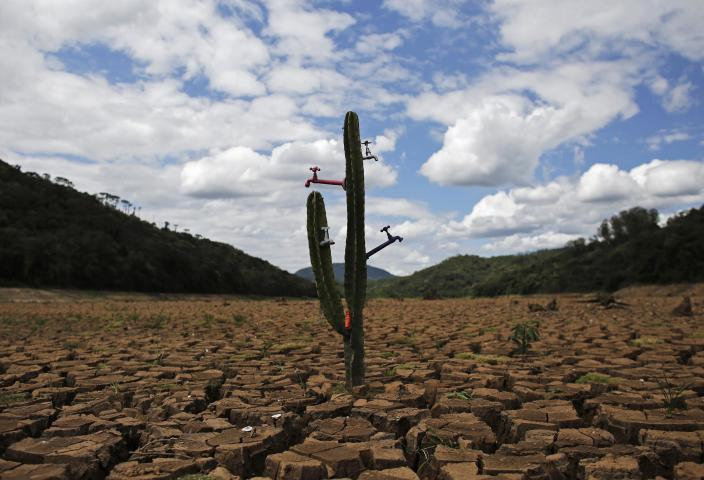 """A drought-related cactus installation called """"Desert of Cantareira"""" by Brazilian artist and activist Mundano is seen at Atibainha dam, part of the Cantareira reservoir, during a drought in Nazare Paulista, Sao Paulo December 2, 2014. Sao Paulo, Brazil's drought-hit megacity of 20 million, has about two months of guaranteed water supply remaining as it taps into the second of three emergency reserves, officials say. REUTERS/Nacho Doce (BRAZIL - Tags: DISASTER ENVIRONMENT SOCIETY TPX IMAGES OF THE DAY)"""