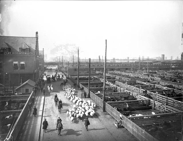 View of livestock pens and workers herding sheep at the Union Stock Yard, Chicago, circa 1910. (Photo: Chicago History Museum/Getty Images)