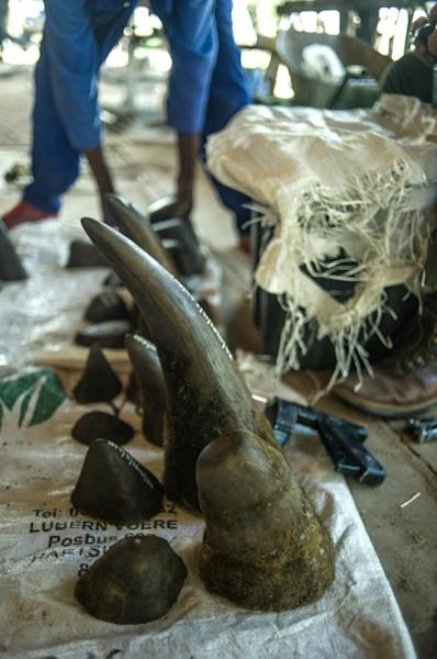 Rhino horns are highly prized in Asia where they have been known to fetch up to $60,000 per kilo -- more than gold or cocaine