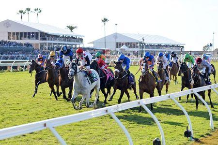 Nov 4, 2017; Del Mar, CA, USA; World Approval (5) wins the ninth race during the 34th Breeders Cup world championships at Del Mar Thoroughbred Club. Mandatory Credit: Jake Roth-USA TODAY Sports