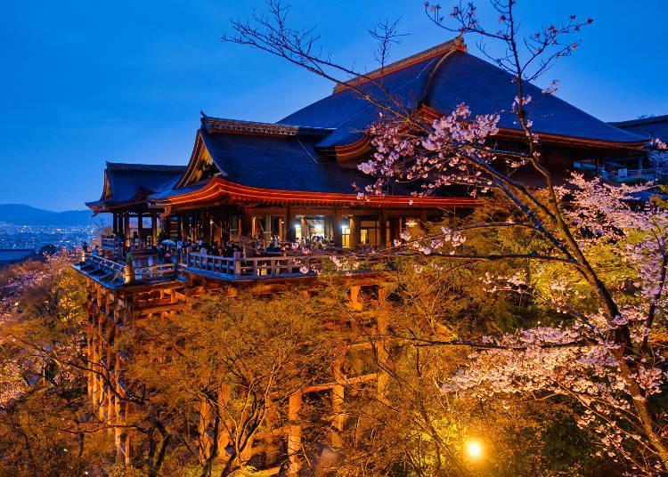 During the special viewing period, the blossoms are lit up and you can enjoy them in a different light