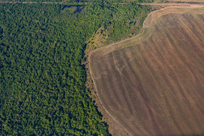 The Amazon has emitted more carbon than it absorbed since 2010, study says