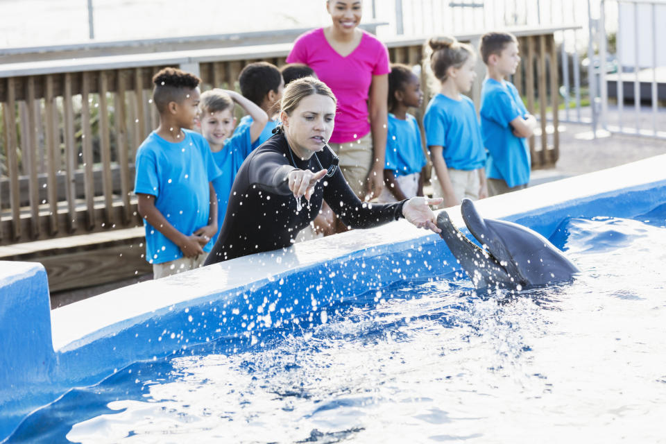 A dolphin is given instructions from trainer at a aquarium